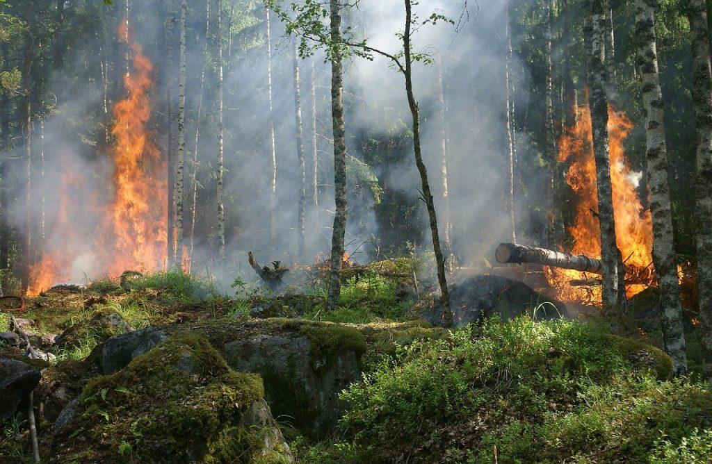 Пожары в Сибири, 2019