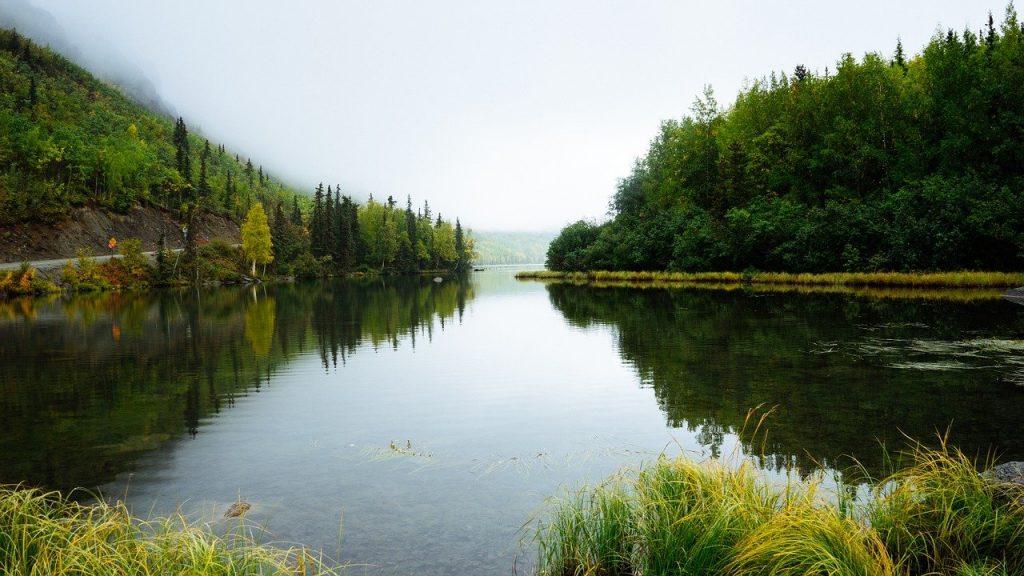 Как мы можем помочь экологии